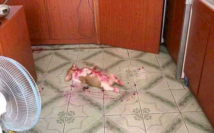 Dikira Mati  dan Berdarah-darah, Ternyata Anjing Ini Tidur Karena Kekenyangan Buah Naga